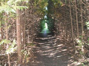 Path by Kimberley Payne