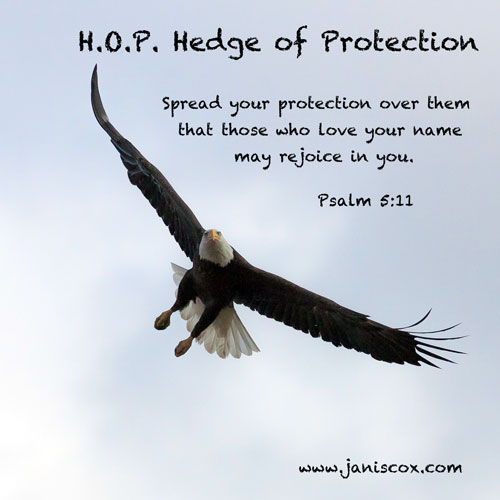 Hawk - Psalm 5:11